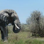 Parque Masai Mara, a metros del Hotel.