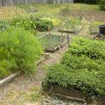 Yorktown garden