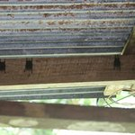 Bats on the ceiling of the open air lodge
