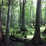 Swamp area before curve to park.