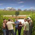 Yarra Valley Wine Experience