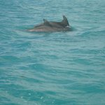 Vista de delfines.