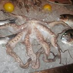 octopus (to be grilled later)