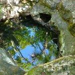 Tiny cenote at the Botanical Garden