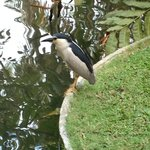 Pond immediately outside our balcony.  This bird was fishing there three strai