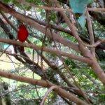 Bird Outside Room