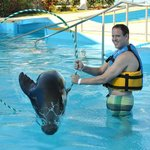 Sea Lion through a hoop!