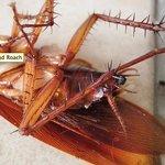 Roach house