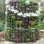 Biowall -  a special wall created with assembled pot racks