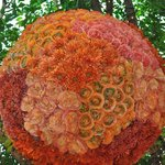 Giant baubles made from fresh flowers!