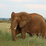 Elephant seen on our game drive