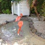 flamingos hanging on the beach
