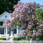 The pre-Civil War Haan lilac may have been planted when home was first constructed in 1830