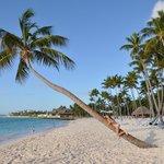Famous Palm