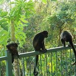 monkeys next to pool