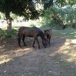 Back Yard Horses
