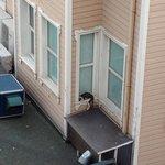 вид с террасы ресторана, кот прячется от ветра