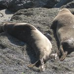 Elephant seals soaking up the sun!