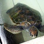 Juara Turtle Project