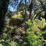 Eden Garden Photo