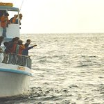 Indian Whale Watch- Day Boat Tours Photo
