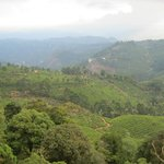 Pothamedu View Point - 2