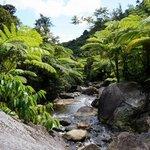 treefern waterfall short hike