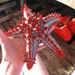 A giant starfish