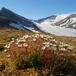 explore the artic fauna by hiking in adventures landscapes