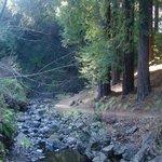 Path near the stream