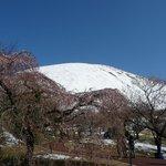 桜にはチト早かった