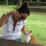 resident kitty