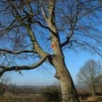 fallig branch