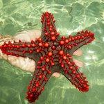 le stelle marine all'atollo emerso con la bassa mare