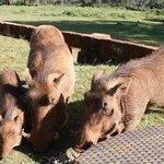Warthogs Breakfast!