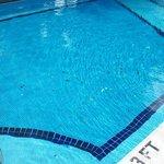 Leaves in pool 24/7