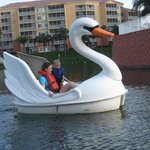 Paddle the Swan