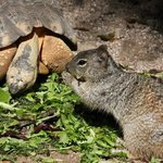 Turtles can share too!