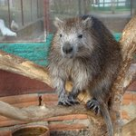 The lone water rat