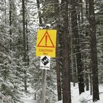 Ski trail marking