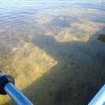 Tarpon Bay water depth of about 5-6 ft.