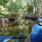 Commodore Creek tree overhang