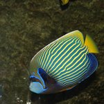 Nice colorful fish
