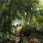 lush shrubery