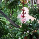 Tropical flower at the hotel