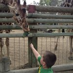 feeding the giraffes was only $2-