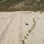 Turtle Tracks I
