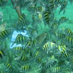 Lots of fish in Playa Pilar Reef