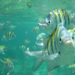 A fish stealing the shot in Playa Pilar Reef