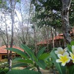 Koh Mook Rubber Tree Bungalows Photo
